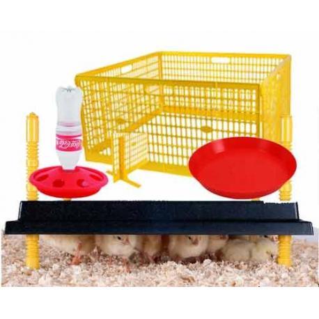 Kit inicial para cría de pollitos de primera edad N4