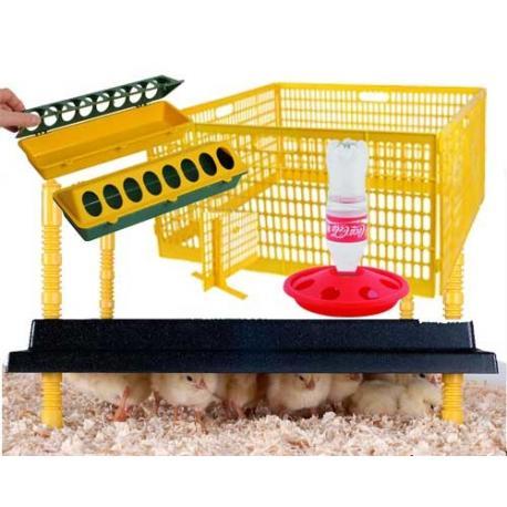 Kit inicial para cría de pollitos de primera edad N5