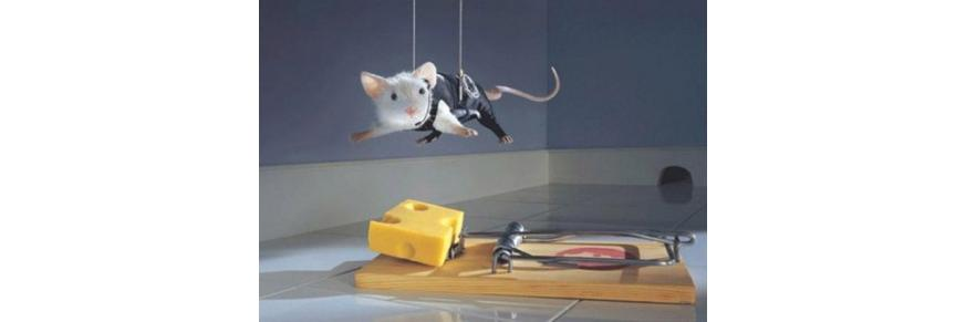 Desinfestación Trampa roedores